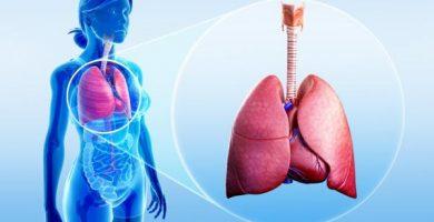 Funciones del sistema respiratorio